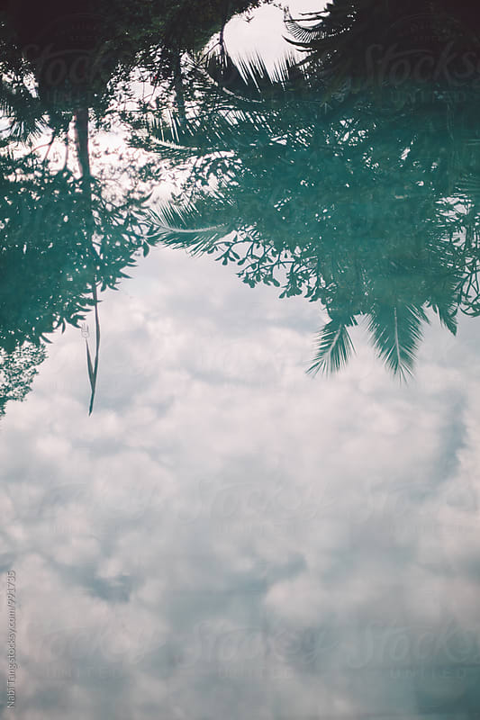 Palm tree and Balinese sky reflection on the swimming pool by Nabi Tang for Stocksy United