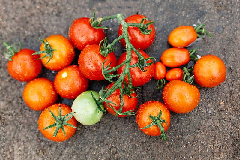 tomato by jira Saki for Stocksy United