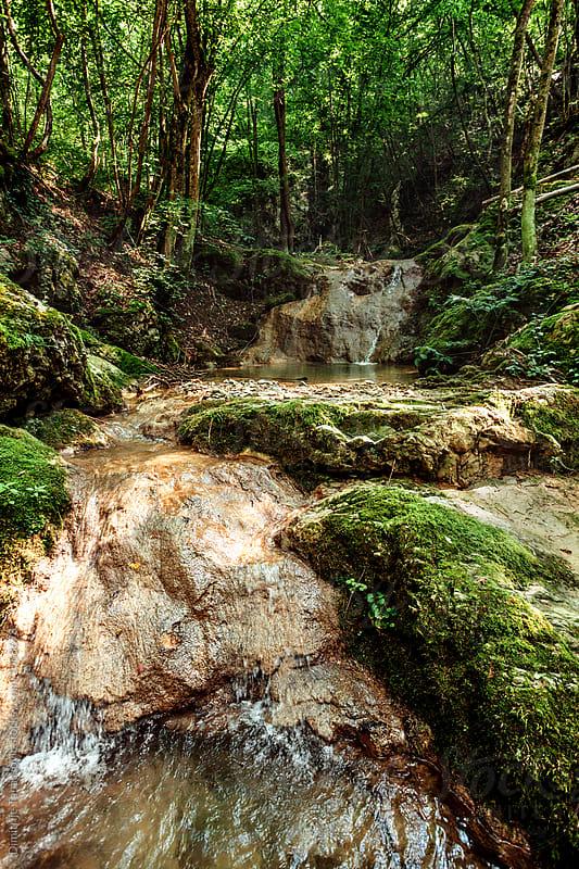 Green forest by Dimitrije Tanaskovic for Stocksy United