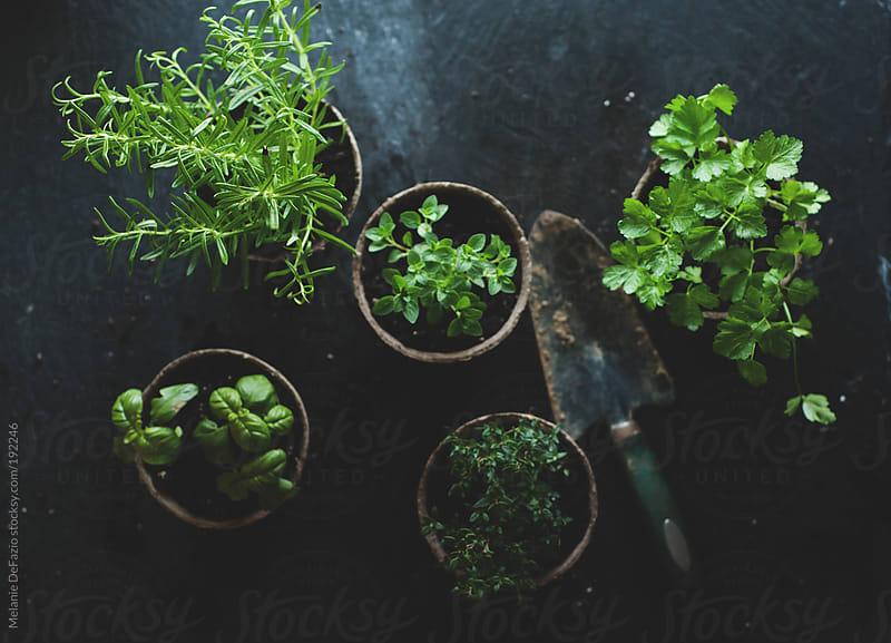 Herbs by Melanie DeFazio for Stocksy United