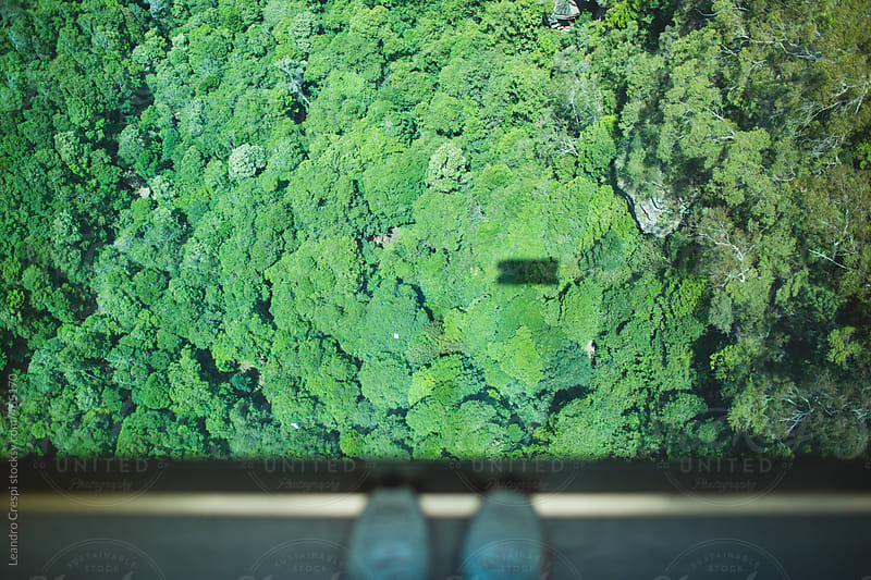 Looking down from a cable railway in the forest, The Blue Mountains by Leandro Crespi for Stocksy United