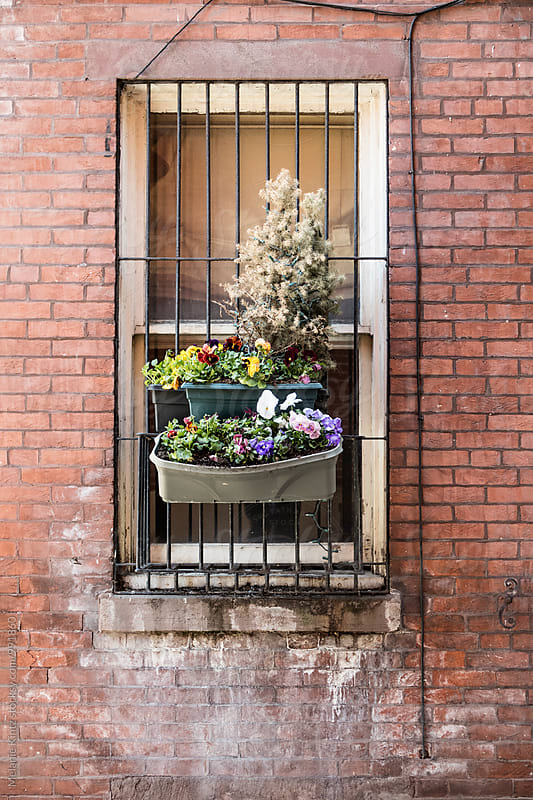 Planters fastened to the bars in front of a window by Melanie Kintz for Stocksy United