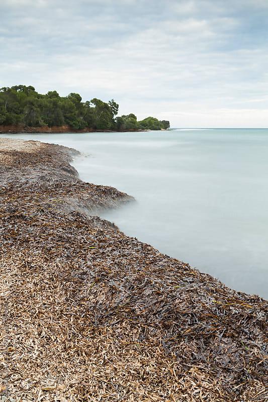 Seashore full of algae by Marilar Irastorza for Stocksy United