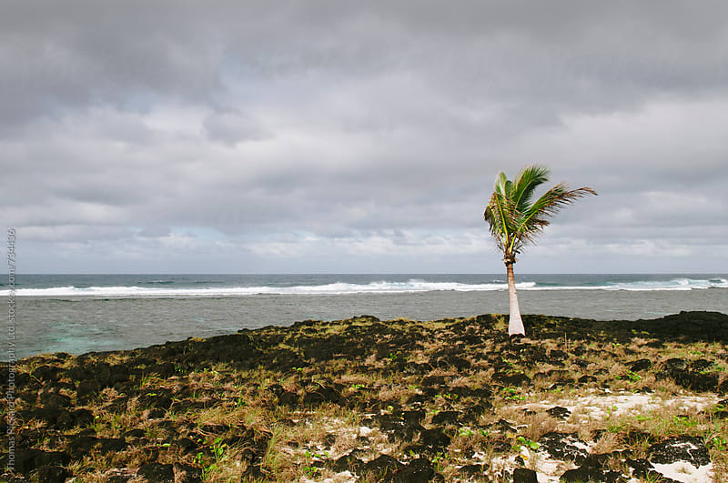 Palm and lava, Samoa. by Thomas Pickard for Stocksy United