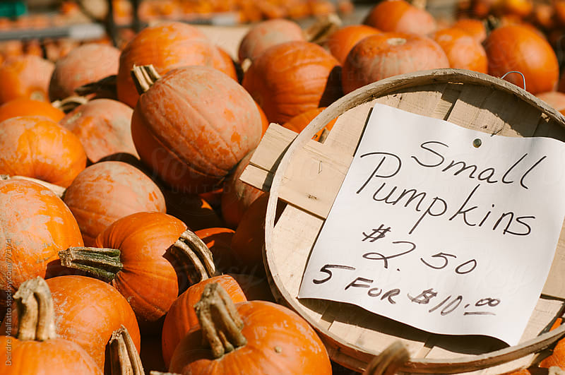 small pumpkins for sale with sign by Deirdre Malfatto for Stocksy United