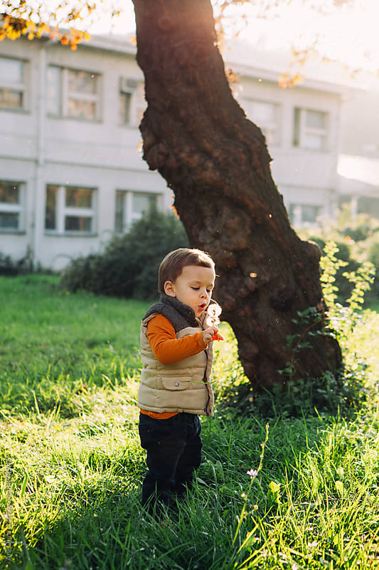 Little boy with a dandelion flower. by Ani Dimi for Stocksy United