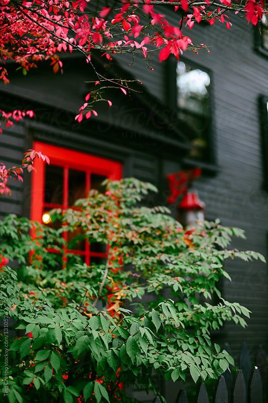 Dark House by Tina Crespo for Stocksy United