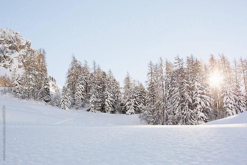 Snow covered trees by michela ravasio for Stocksy United