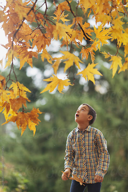 Boy picking autumn leafs by Dejan Ristovski for Stocksy United