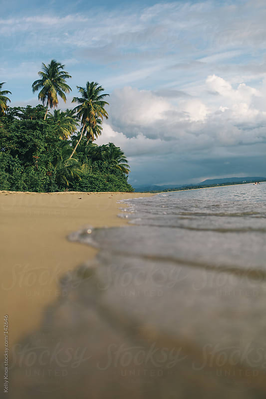 palm trees on the shoreline by Kelly Knox for Stocksy United