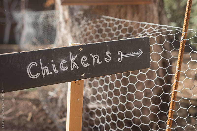 rustic sign with the word Chickens and an arrow by Gillian Vann for Stocksy United