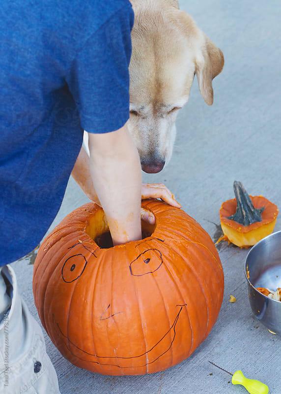 series of boy carving halloween pumpkin by Tana Teel for Stocksy United