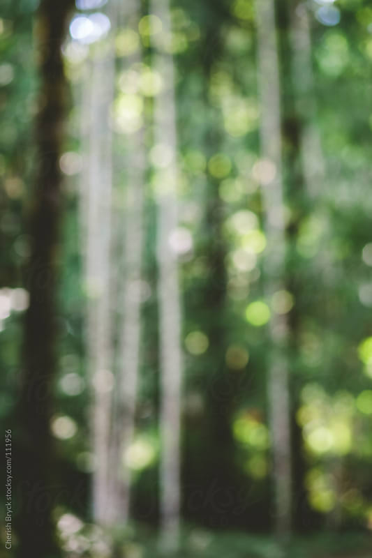 A blurry look through the forest. by Cherish Bryck for Stocksy United