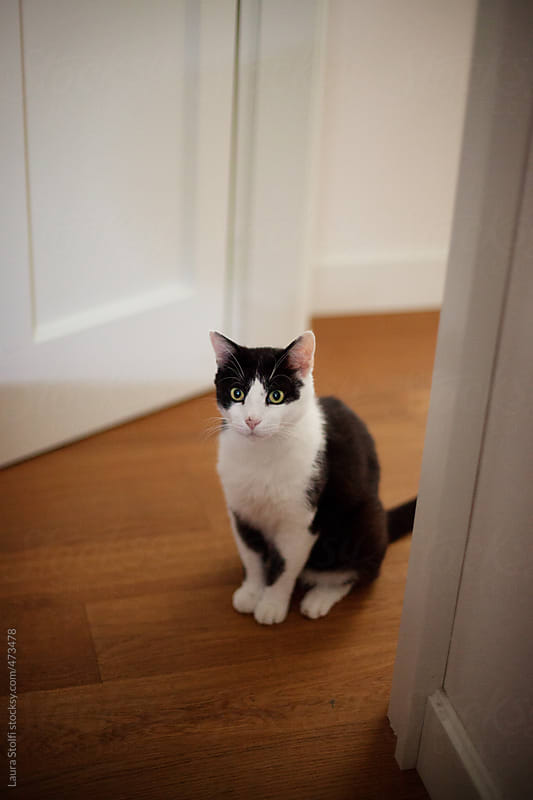 Cat sitting on doorway and looking at camera by Laura Stolfi for Stocksy United
