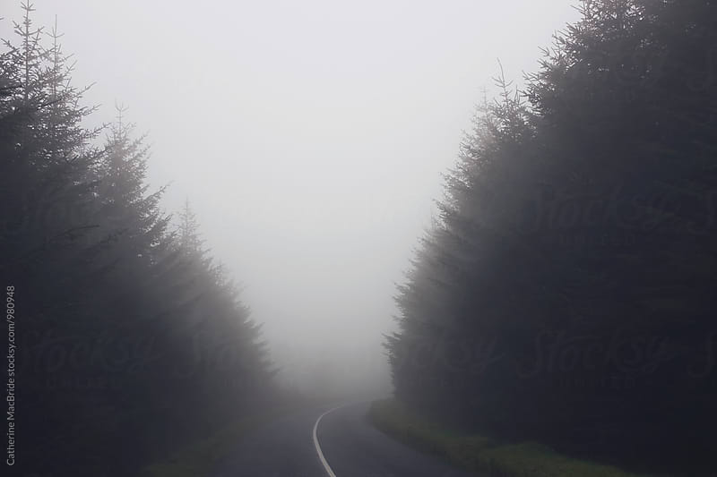 A road into fog... by Catherine MacBride for Stocksy United