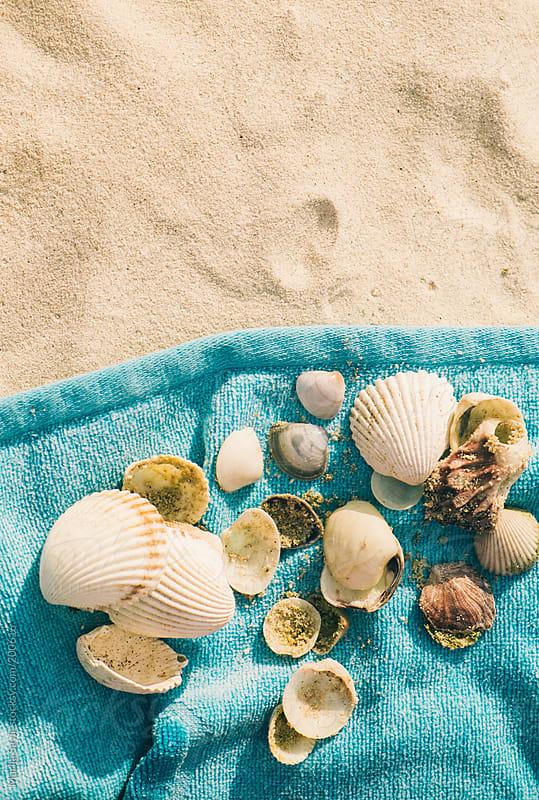 Sea Shells on Blue Towel by Marija Savic for Stocksy United