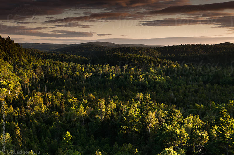 Forest Sunset by David Jackson for Stocksy United