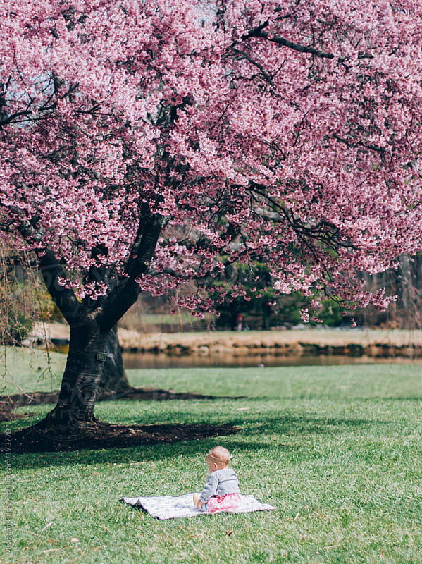 baby sitting under a cherry blossom tree by Meaghan Curry for Stocksy United