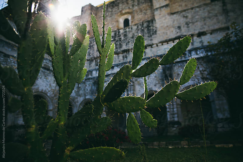 Cactus on a church at sunset in Mexico by Alejandro Moreno de Carlos for Stocksy United