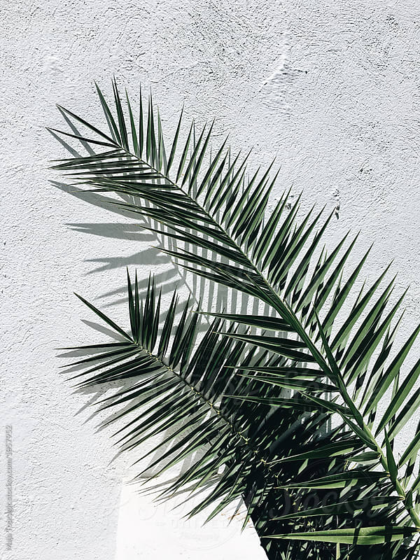 Palm tree leaves against a white wall by Maja Topcagic for Stocksy United