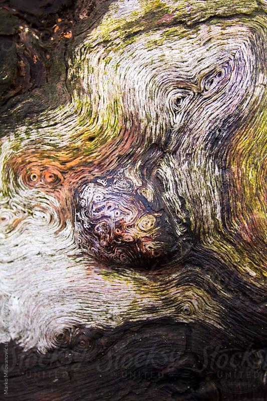 Wierd tree rings, lichen by Marko Milovanović for Stocksy United
