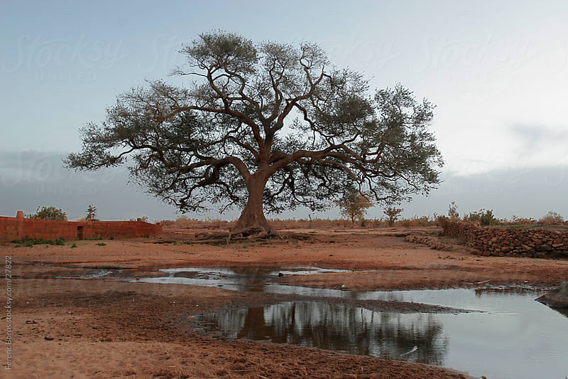 Beautiful tree standing on the bank of a stream by Ferenc Boros for Stocksy United