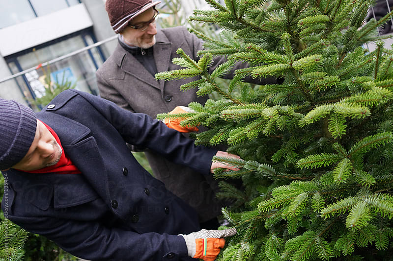 Checking the quality of the christmas tree by Jasmin Awad for Stocksy United