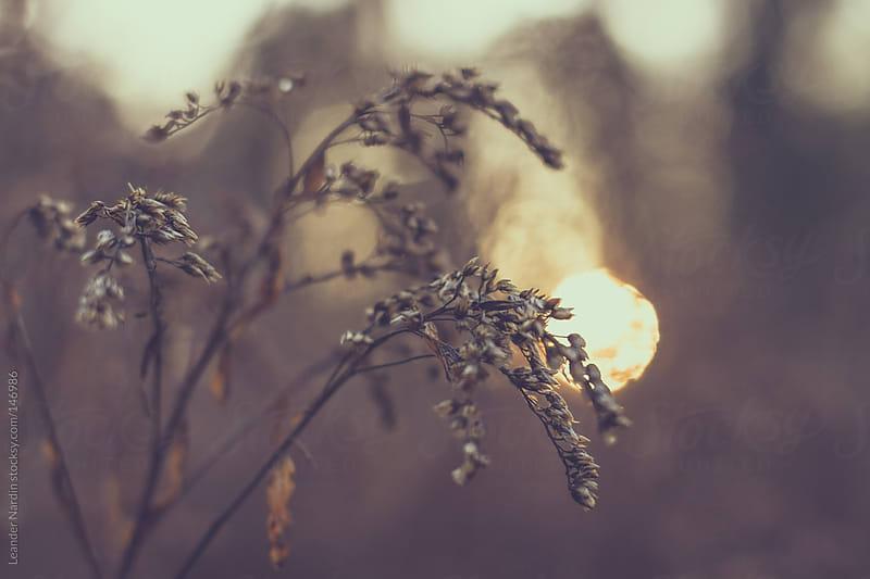 plants at sunset by Leander Nardin for Stocksy United