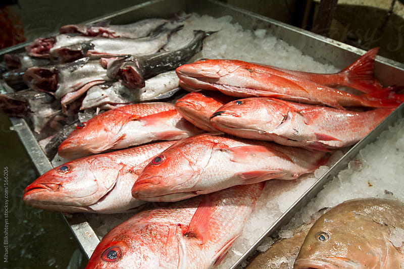 Fresh fish, including red snapper, for sale at a New York wholesale market by Mihael Blikshteyn for Stocksy United