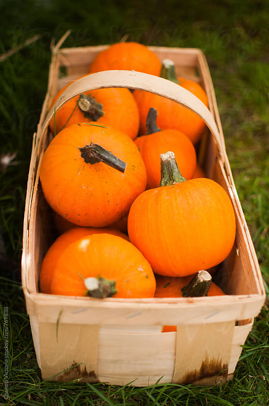 Pumpkins in a basket by Chelsea Victoria for Stocksy United