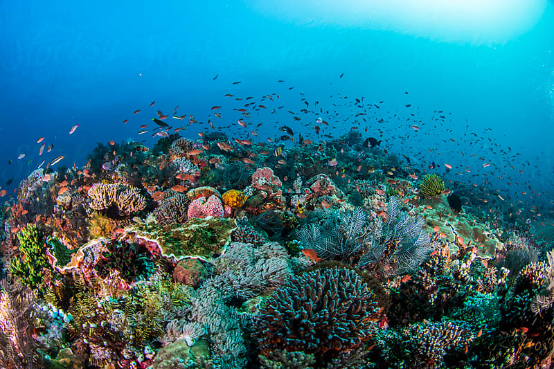 coral and reef under sunlight in clear water by Song Heming for Stocksy United
