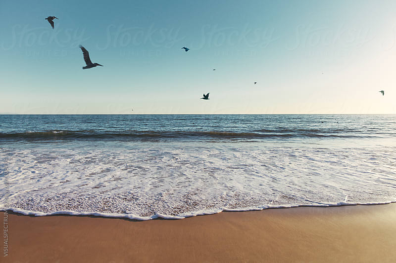 Pelicans Flying Over Ocean by VISUALSPECTRUM for Stocksy United