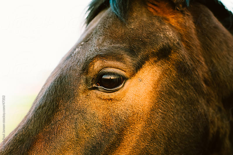 close-up Horse by Robert-Paul Jansen for Stocksy United