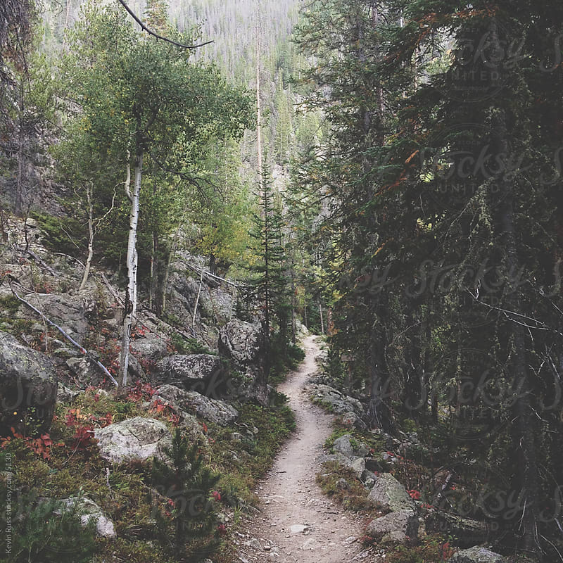 Trail in Forest by Kevin Russ for Stocksy United