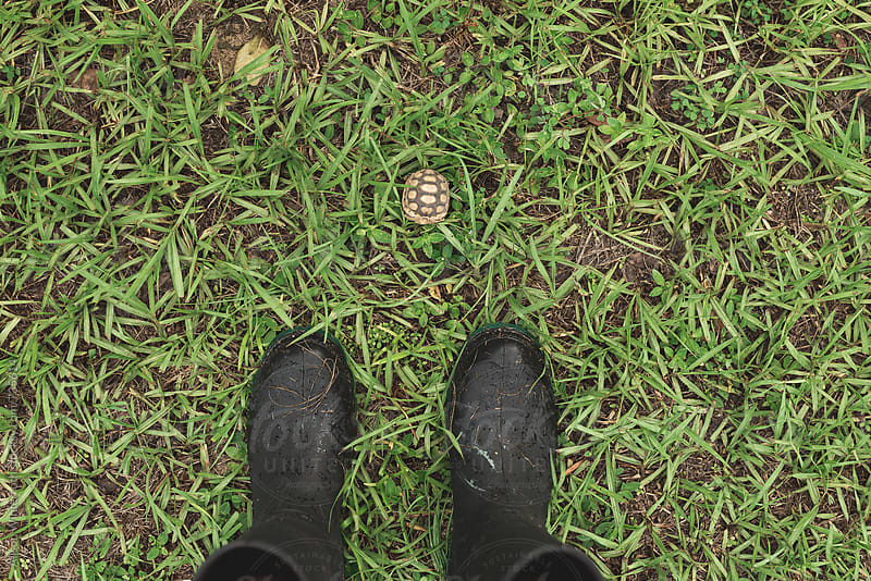 A Woman In Rain Boots Looks At A Tiny Turtle On The Ground by Alison Winterroth for Stocksy United