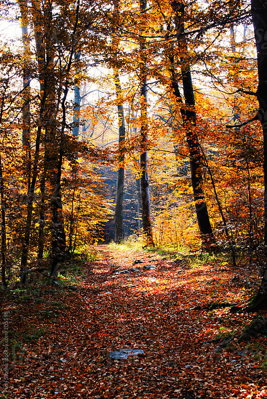 Autumn forest by Pixel Stories for Stocksy United