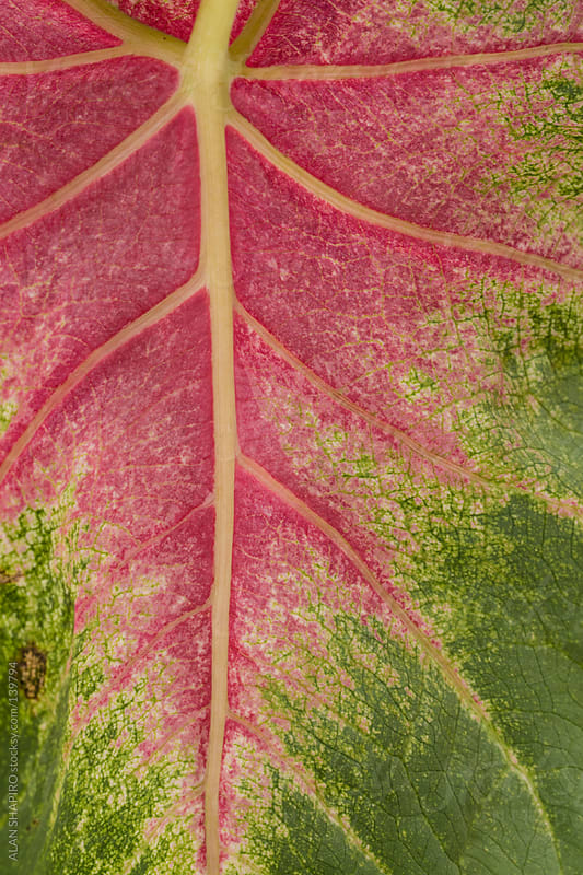 Leafscape by ALAN SHAPIRO for Stocksy United