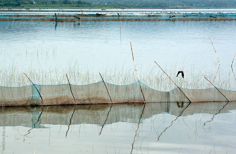 Chilika lake India  by PARTHA PAL for Stocksy United