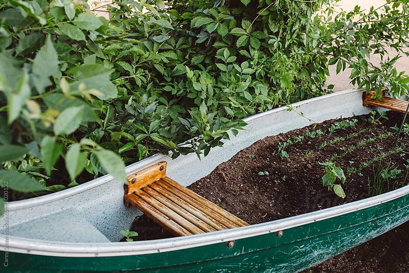 Cute garden planted in a canoe by Carey Shaw for Stocksy United