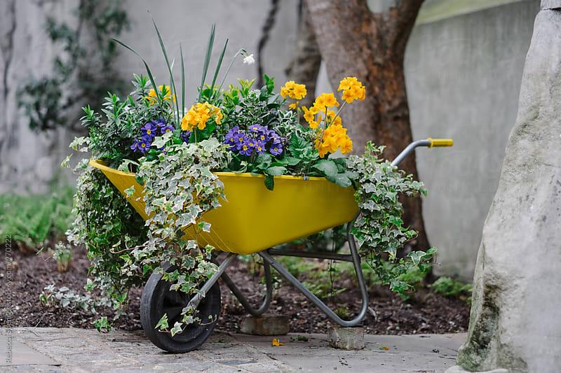 Wheelbarrow full of flowering plants by Rebecca Spencer for Stocksy United