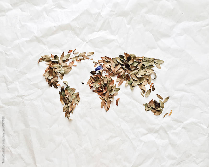 A map of the world which was made by dried leaves by Toma Evsiukova for Stocksy United
