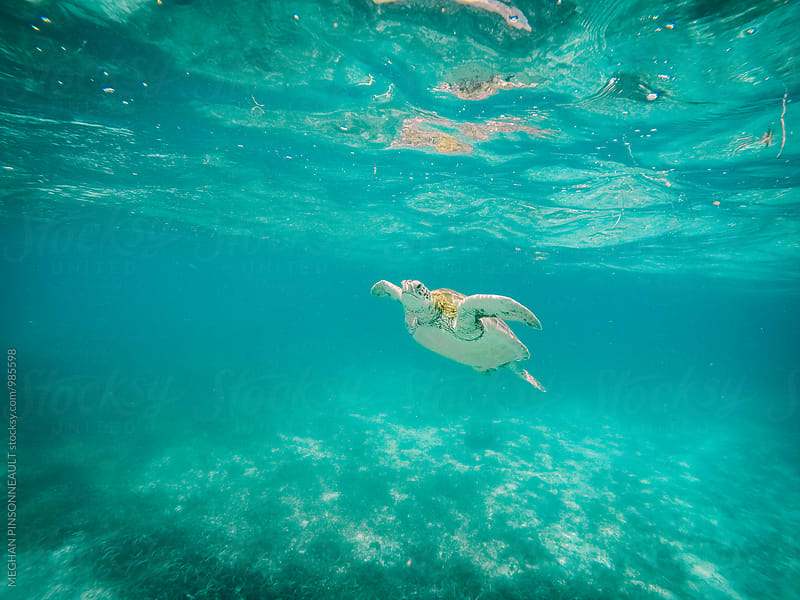 Sea Turtle in Underwater Wonderland by MEGHAN PINSONNEAULT for Stocksy United