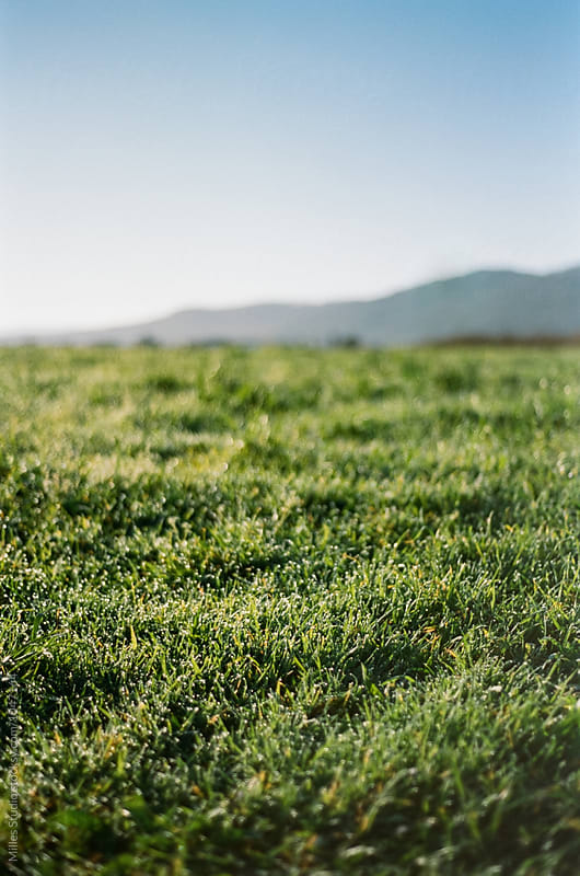 Grassland by Milles Studio for Stocksy United