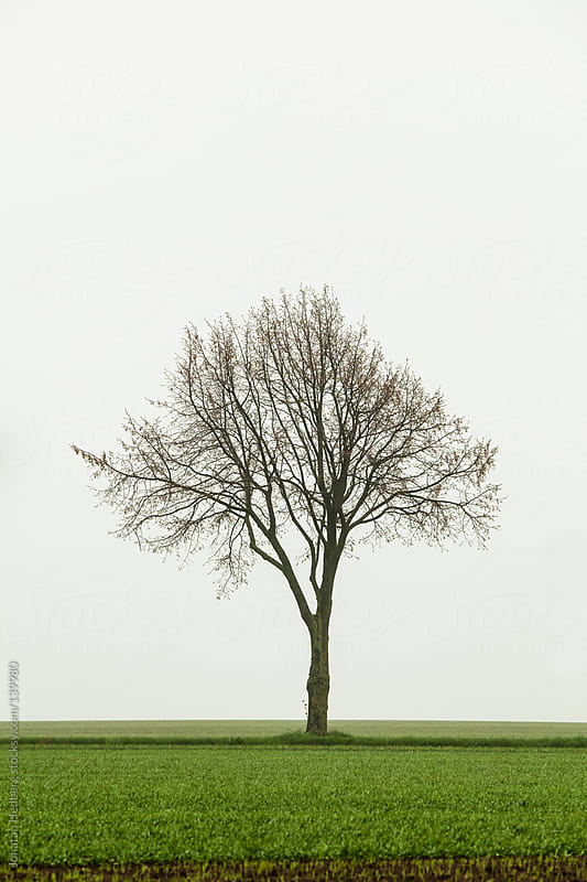 A tree against a foggy background by Jonatan Hedberg for Stocksy United