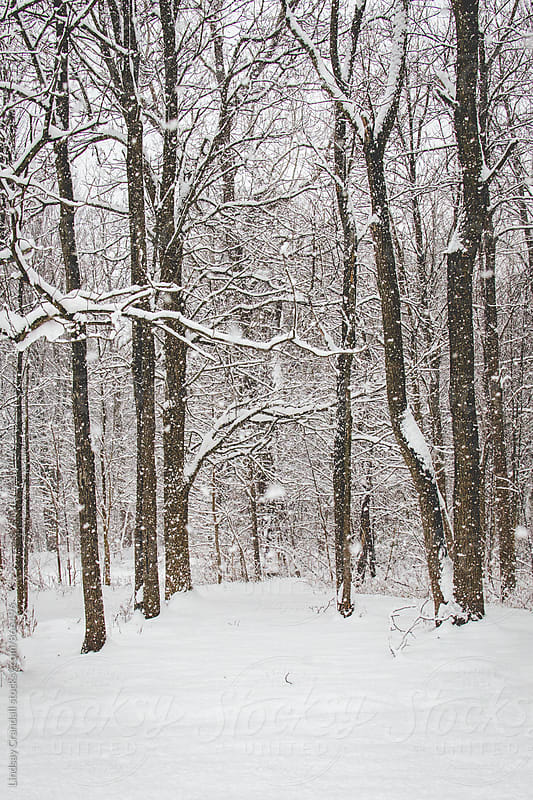 Path through a snowy wood by Lindsay Crandall for Stocksy United