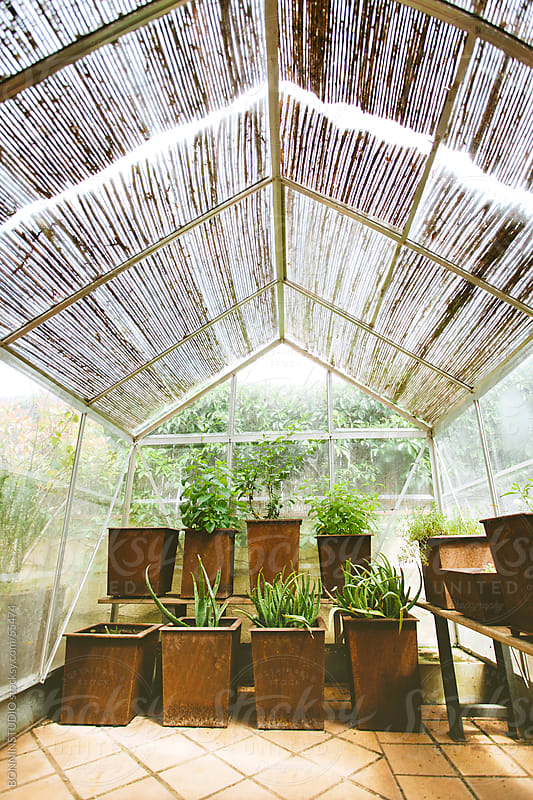 Cute greenhouse with some plants. by BONNINSTUDIO for Stocksy United