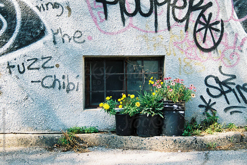 Potted plants in front of a graffiti wall by Jen Grantham for Stocksy United