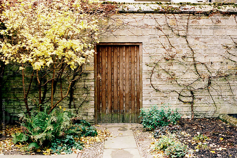 A wooden gate in a wall surrounded by climbing plants by Helen Rushbrook for Stocksy United