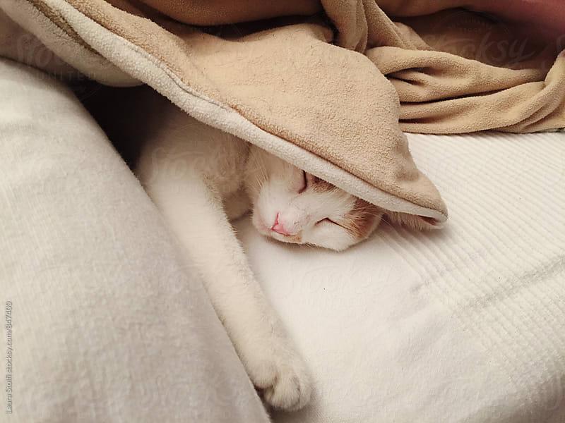 Close up of blissful cat sleeping under blanket on sofa by Laura Stolfi for Stocksy United