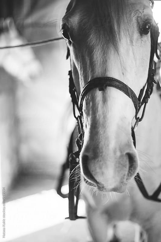 White horse closeup by Natasa Kukic for Stocksy United